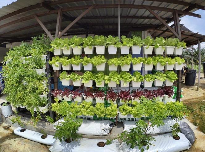 Malaysia Johor Batu Pahat Urban Farming Rhyna DIY Planting Vegetables 马来西亚 柔佛 峇株巴辖 绿纳 城市农场 直立式家居菜蔬种植 A03