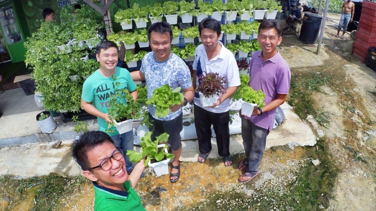 马来西亚 城市农场 从心做起 绿纳