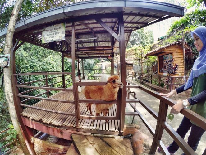 KL Tower Kuala Lumpur Malaysia Selangor Mini Zoo Raymond Ong Effye Anf Ho Koon Kiang Bella Phei Effye Media A03