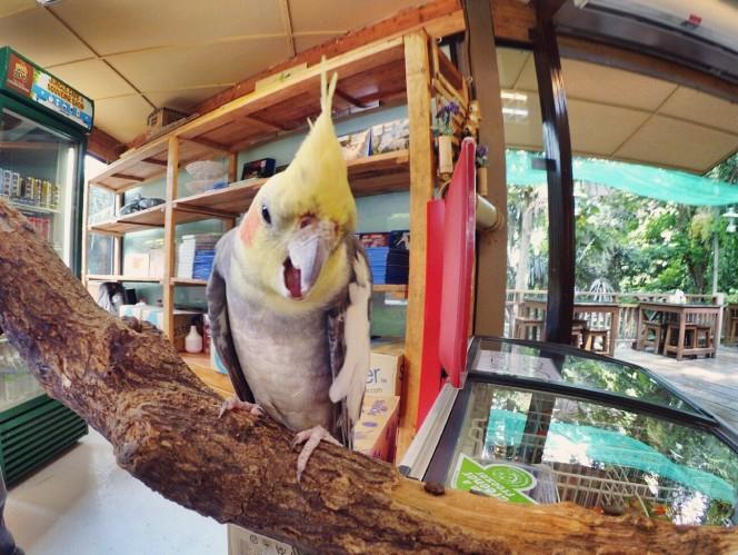 KL Tower Kuala Lumpur Malaysia Selangor Mini Zoo Raymond Ong Effye Anf Ho Koon Kiang Bella Phei Effye Media A11