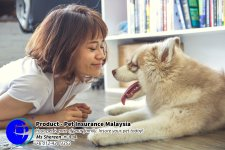 Pet Insurance Malaysia Johor Batu Pahat Agensi Pekerjaan Unilink Prospects SB Wisma V Cat Insurance Malaysia Dog Insurance Malaysia Johor Batu Pahat Your pet is part of your family Insure your pet today A09