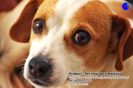 Pet Insurance Malaysia Johor Batu Pahat Agensi Pekerjaan Unilink Prospects SB Wisma V Cat Insurance Malaysia Dog Insurance Malaysia Johor Batu Pahat Your pet is part of your family Insure your pet today A11