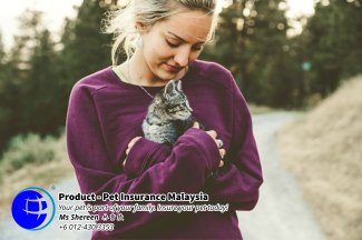 Pet Insurance Malaysia Johor Batu Pahat Agensi Pekerjaan Unilink Prospects SB Wisma V Cat Insurance Malaysia Dog Insurance Malaysia Johor Batu Pahat Your pet is part of your family Insure your pet today A13