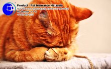 Pet Insurance Malaysia Johor Batu Pahat Agensi Pekerjaan Unilink Prospects SB Wisma V Cat Insurance Malaysia Dog Insurance Malaysia Johor Batu Pahat Your pet is part of your family Insure your pet today A16