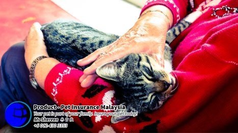 Pet Insurance Malaysia Johor Batu Pahat Agensi Pekerjaan Unilink Prospects SB Wisma V Cat Insurance Malaysia Dog Insurance Malaysia Johor Batu Pahat Your pet is part of your family Insure your pet today A17