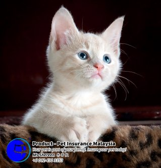 Pet Insurance Malaysia Johor Batu Pahat Agensi Pekerjaan Unilink Prospects SB Wisma V Cat Insurance Malaysia Dog Insurance Malaysia Johor Batu Pahat Your pet is part of your family Insure your pet today A03