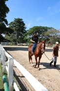 Unilink Group Company Trip 2018 April from Agensi Pekerjaan Unilink Prospects Sdn Bhd Horse Riding at Johor Bahru 33