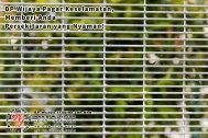 BP Wijaya Trading Sdn Bhd Malaysia Pahang Kuantan Temerloh Mentakab Pengeluar Pagar Keselamatan Pagar Taman Bangunan dan Kilang dan Rumah untuk Bandar Pemborong Pagar A01-27